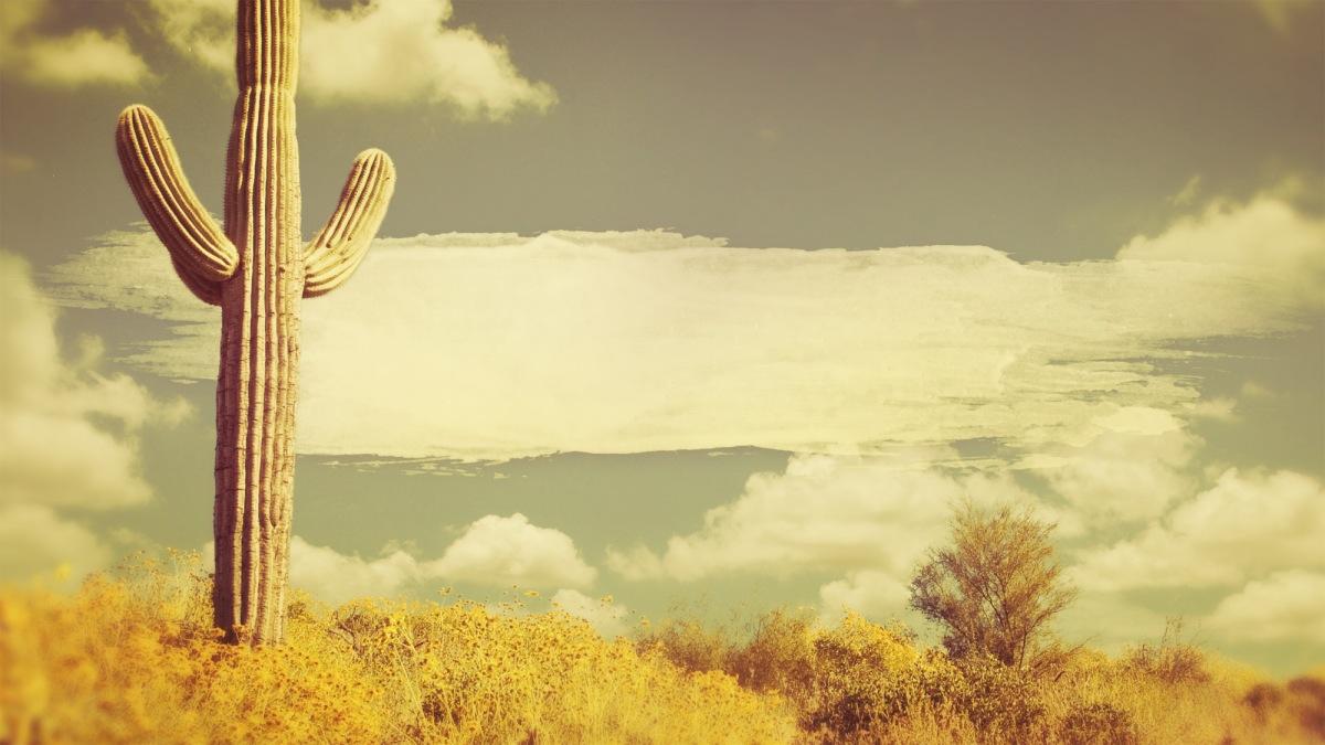 prayers_in_the_desert_wide_t_nt